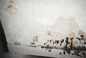 Best Schimmel Op Plafond Badkamer Contemporary - House Design Ideas ...